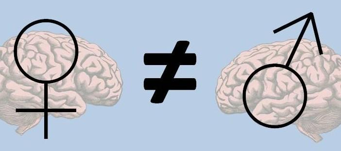 Male-And-Female-Brains-Cropped-702x311.jpg