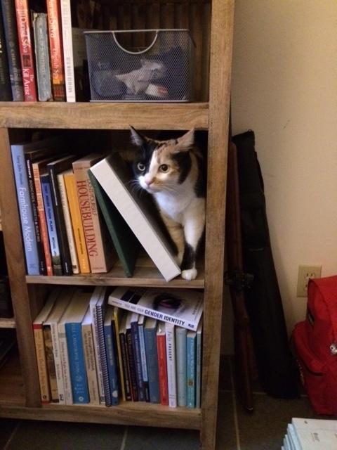 Bookshelf_Peanut.thumb.JPG.a5a508609d111